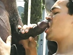 Two musclebound black studs are serviced by their hotel-keeper in foreign lands